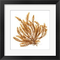 Framed Pacific Sea Mosses VII White Sq