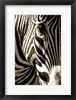 Framed Zebra Head