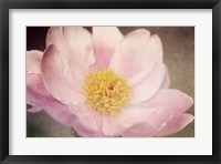 Framed Peony in the Park
