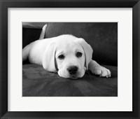 Framed Finn