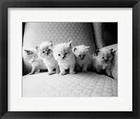 Framed Five Kittens