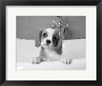 Framed Lulu