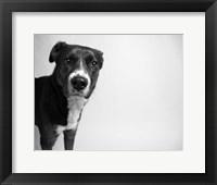 Framed Reilly