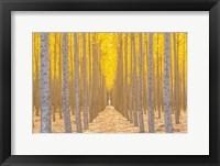 Framed Silence Is Golden