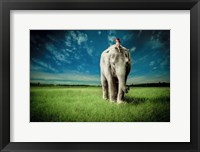 Framed Elephant Carry Me