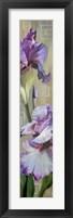 Framed Iris III