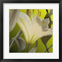 Framed Lily Green
