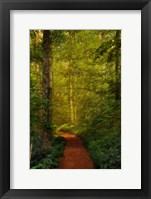 Framed Fairytale Path
