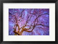 Framed Weeping Cherry