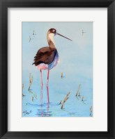 Framed Black Neck Stilt III