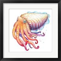 Framed Cuttlefish