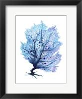Framed Fan Coral - Blue