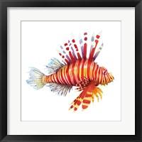 Framed Firefish