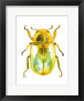 Framed Golden Beetle