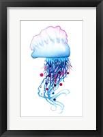 Framed Man o'War Jellyfish