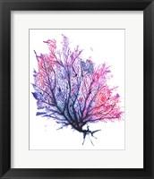 Framed Sea Fan - Purple