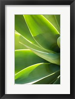 Framed Agave 1