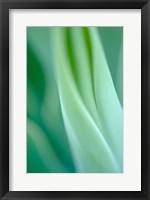 Framed Agave 3