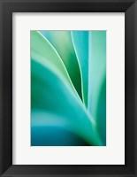Framed Agave 4
