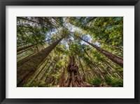 Framed Avatar Grove Canopy