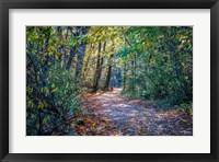 Framed Fall Colours