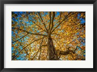 Framed Fall Tree