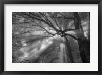 Framed Forest Fog
