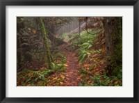 Framed Forest Stroll