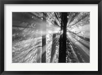 Framed Rays
