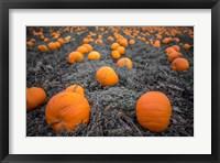 Framed Sea of Pumpkins