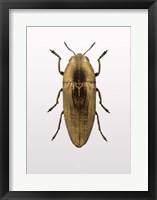Framed Beetle 4