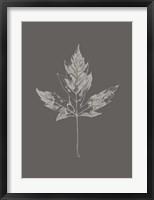 Framed Botanica 5