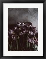 Framed Dark Tulips
