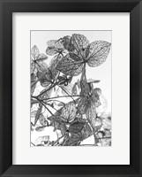 Framed Leaf Composition
