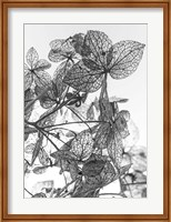Framed Leaf Composition