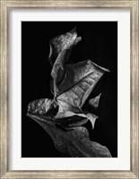 Framed Leaf Composition, Dark