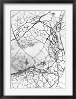 Framed Leaf Skeleton BW