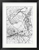 Framed Leaf Skeleton BW