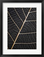 Framed Leaf Veins