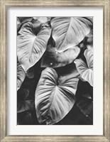 Framed Leaves of Grey