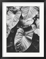 Framed Leaves of Grey