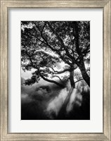 Framed Misty Black