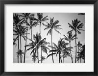Framed Palm Heaven