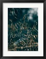 Framed Secret 1