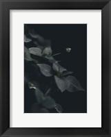 Framed Secret 9