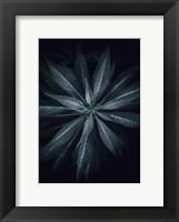 Framed Star Flower
