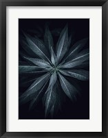 Framed Star Flower