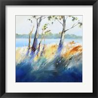 Framed Murray River Bank