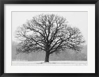 Framed Old Man Winter