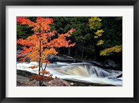 Framed Autumn, Lower Rosseau Falls